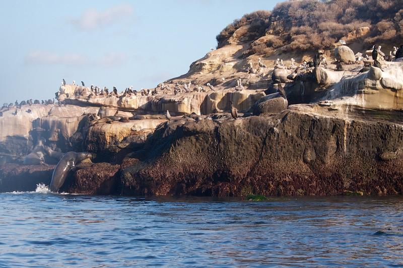 Cove Nov 18 13 4.jpg