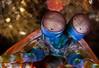 Eyes of Peacock Manthis Shrimp