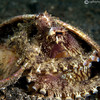 P3278525_edited-2Coconut_Shell_Octopus