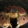 P3278872_edited-2BoxCrab