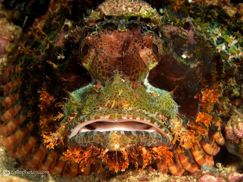 P3289033_edited-2Scorpionfishjpg