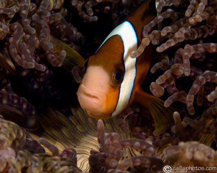P3299439_edited-2AnemoneFish