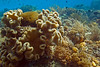Major exception:  photosynthetic algae give the hard corals their color.