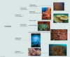 Major types of cnidaria.
