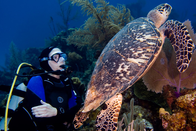 Serena swimming with an Hawksbill turtle.