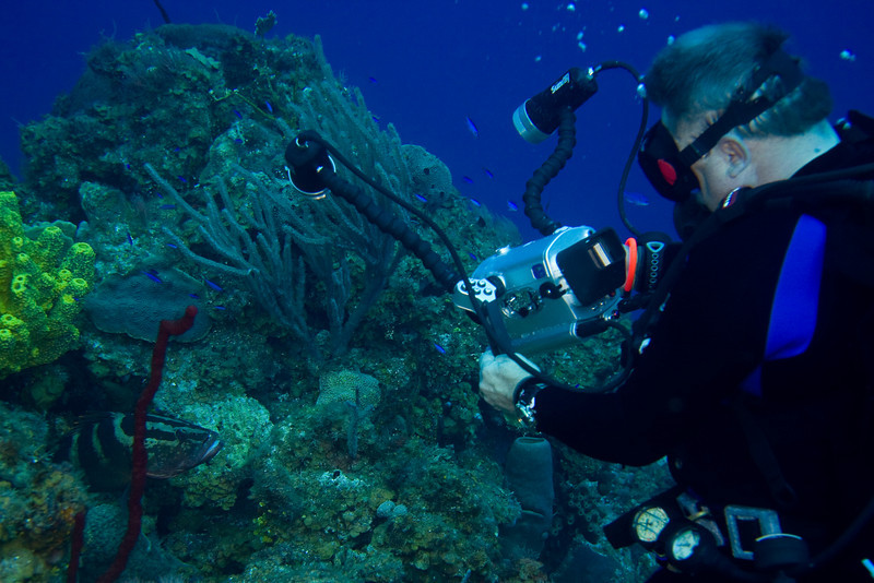 Jim Heimer recording the life of a Nassau Grouper.