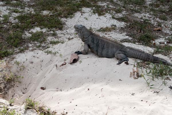 Around Little Cayman Beach Resort, Little Cayman Museum