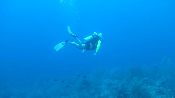 Jay and a Hawksbill Turtle