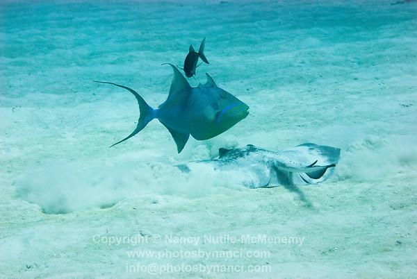 Reef Divers Bloody Bay