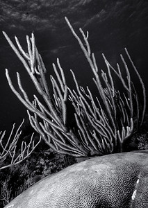 20100620_Cayman_0512-Edit