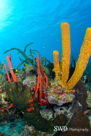 Sponge Landscape