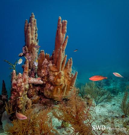 Vibrant Life Around Pillar Coral