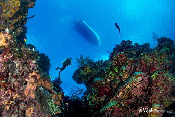 Underwater Landscape - Looking up from the Seabed, Grand Cayman
