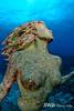Grand Cayman Mermaid