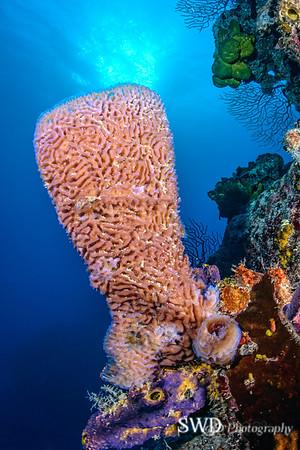 Seascape with Azure Vase Sponge and Sunburst