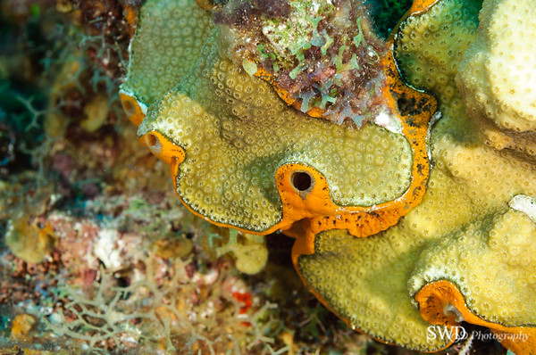Orange Icing Sponge
