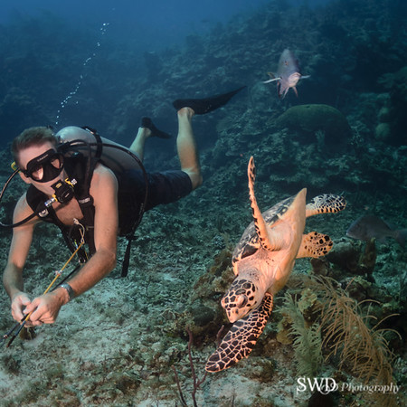Hawksbill with Patrick