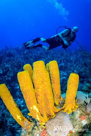 Yellow Tube Sponge and Tom