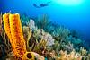 Yellow Tube Sponge Landscape