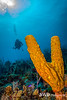 Yellow Tube Sponge and Diver, Grand Cayman