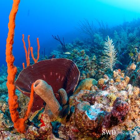 Brown Bowl Sponge