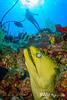 Green Moray, Diver and Sunball - Grand Cayman