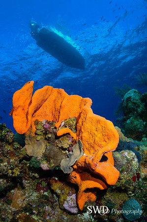 Elephant Ear Sponge with Dive Boat