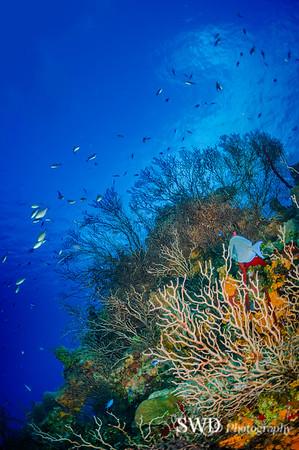 "A Grand Cayman ""Reefscape"""