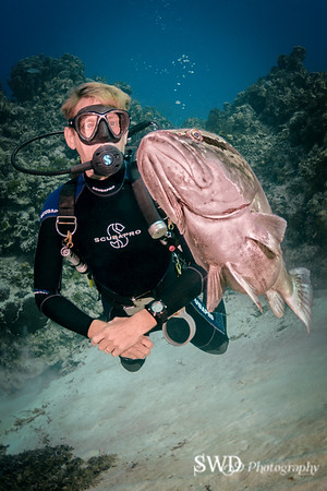 Nassau Grouper and his friend.