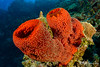 Strawberry Vase Sponge