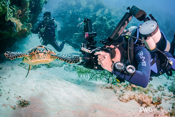 Steve, Henry and Hawksbill Turtle