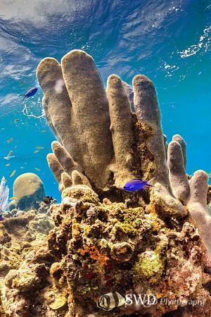 Pillar Coral Seascape