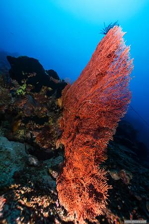 Seafan