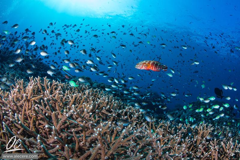 Reef full of life