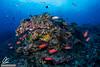 Corals of Crystal Bay