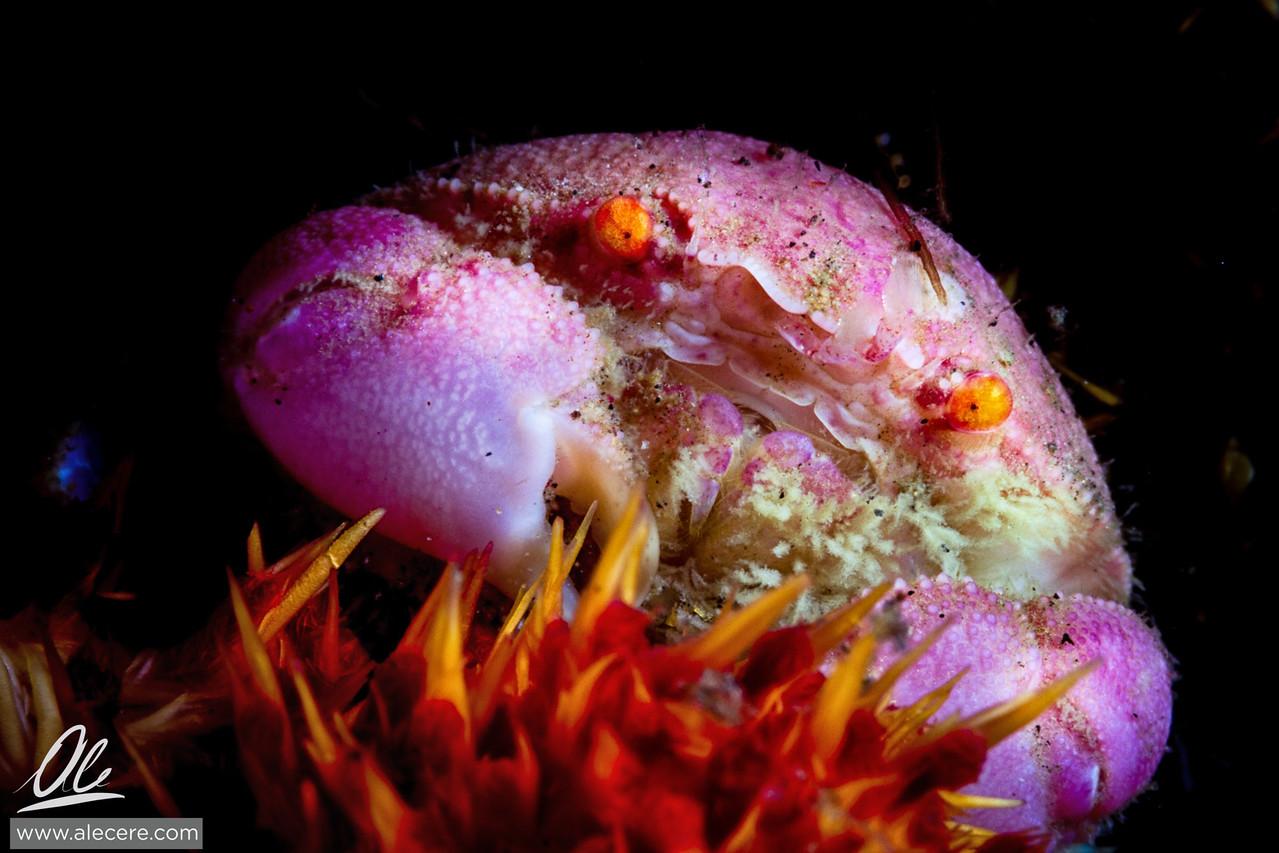 Crustacean cuteness