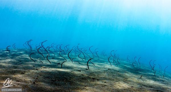 Garden of eels