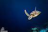 Free diving masterclass