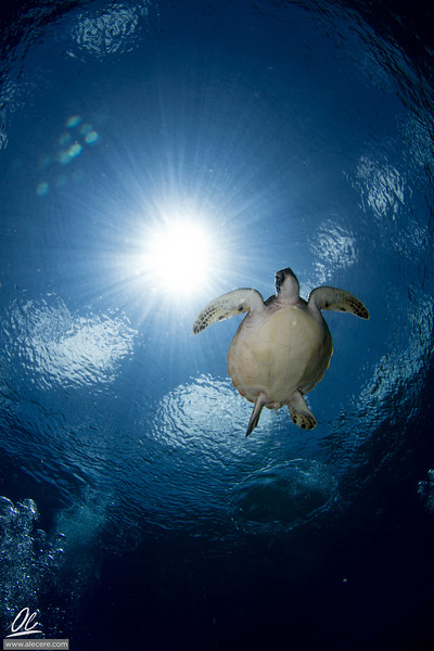 Dreaming of turtles #2