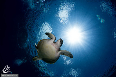 Dreaming of turtles #3