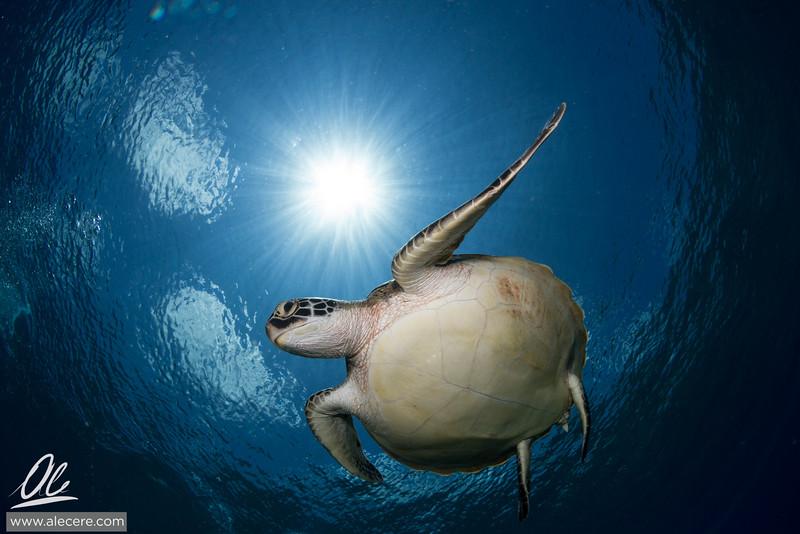 Dreaming of turtles #4
