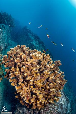 Healty corals