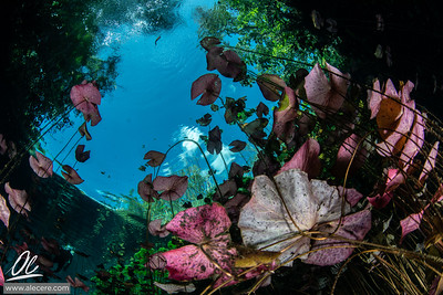 Colors of the cenotes