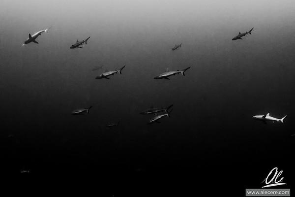 A sky of sharks