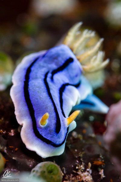 This tunicate is mine
