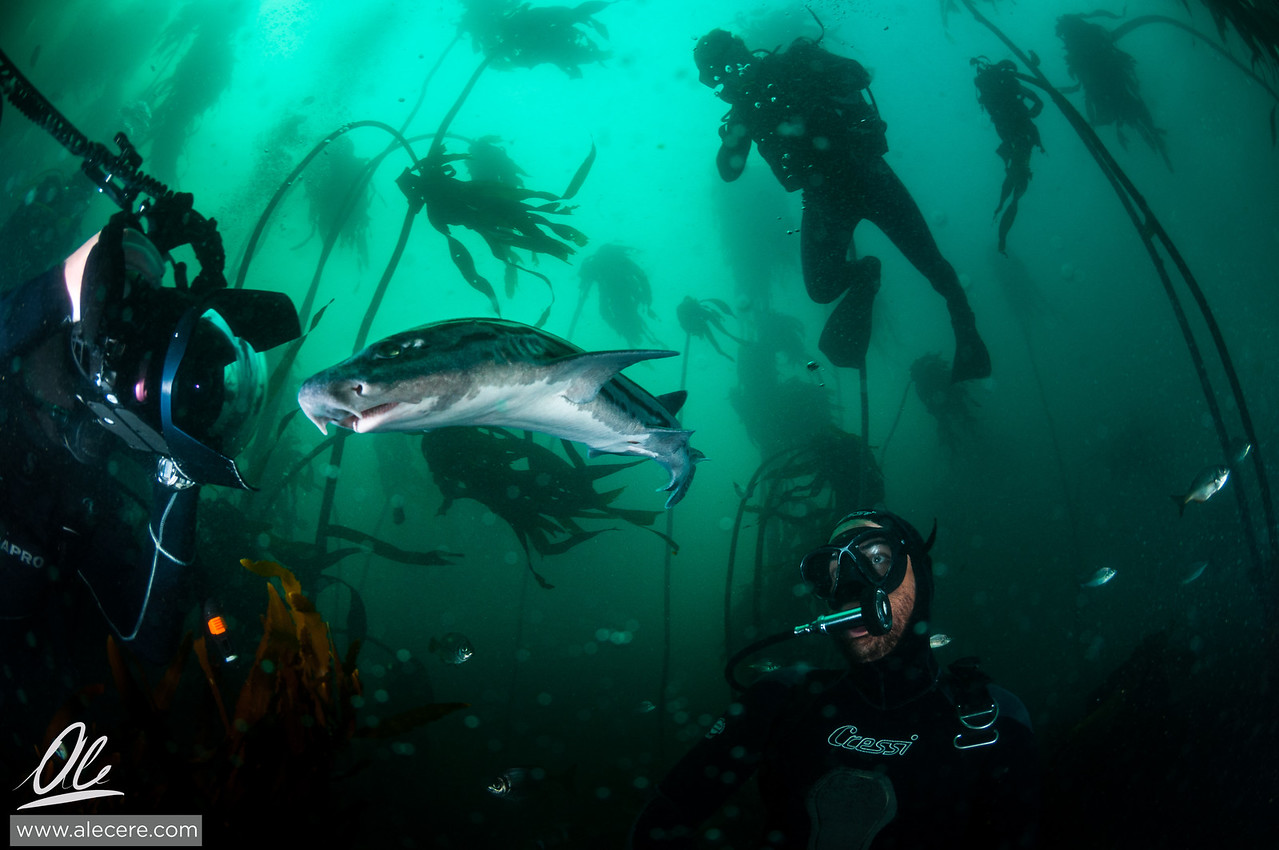 Mind the shark!