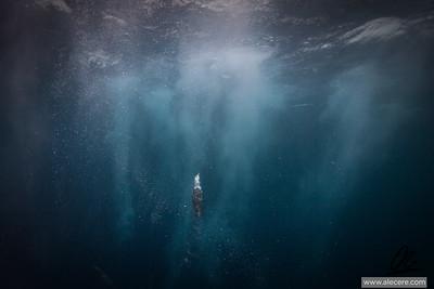 Ascent Gannet regaining the surface after a dive