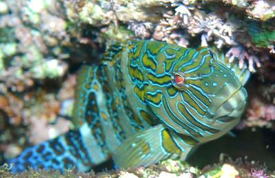 Loreto 2008 - Misc Reef Scenery