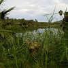 Oasis lagoon at San San Ignacio