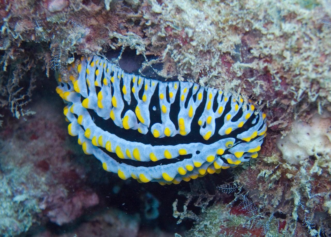 Yup, nudibranch.